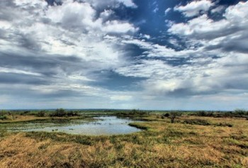 Paynes Prairie. Photo via Florida Department of Environmental Protection.